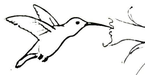 Рисунок Колибри 13