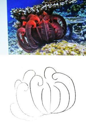 Как нарисовать морскую лилию