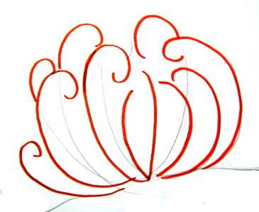 Рисуем морскую лилию