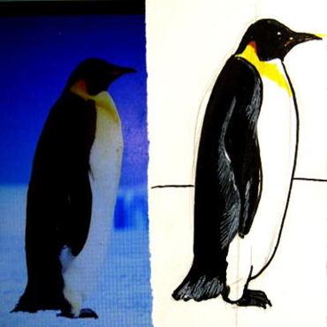 Как нарисовать пингвина и раскраску Пингвин