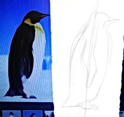 Как нарисовать пингвина -13