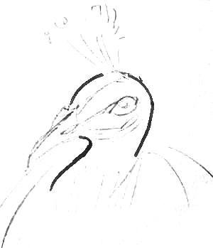 Рисуем голову павлина поэтапно