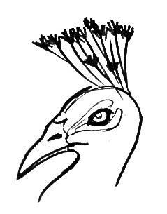 Рисунок голова павлина