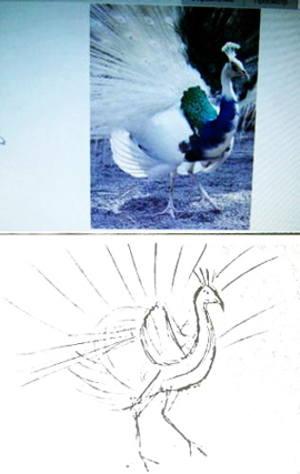 Нарисуем птицу павлина