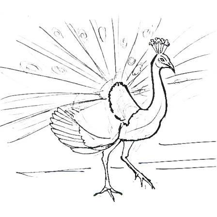 Как нарисовать павлина