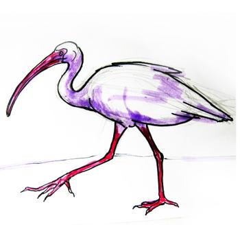 Как нарисовать птицу ибиса