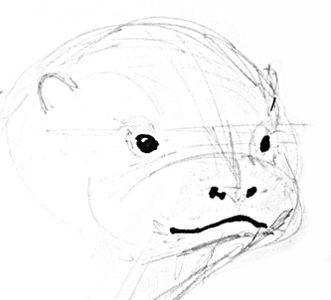Рисуем голову выдры
