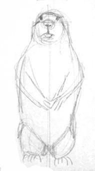 Сурок -эскиз карандашом