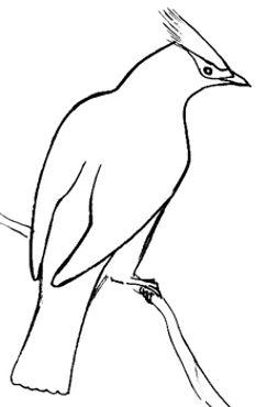 Урок рисования Свиристеля.