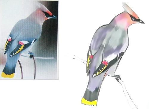 Как нарисовать птицу свиристеля