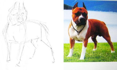 Как нарисовать питбуля