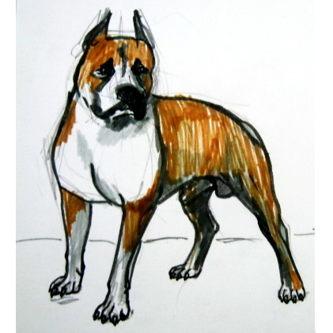 Как нарисовать собаку породы питбуль