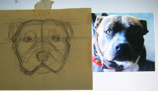 Как нарисовать голову питбуля