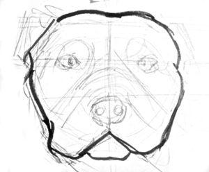 Рисуем голову питбуля