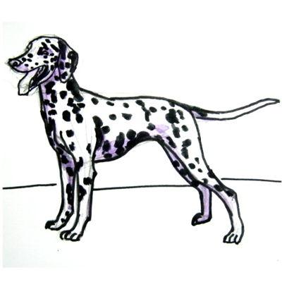 Рисунок Далматин(далматинец)