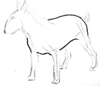 Как нарисовать туловище бультерьера