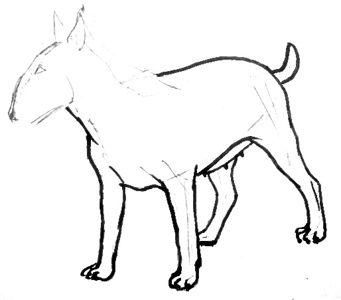 Урок поэтапного рисования бультерьера