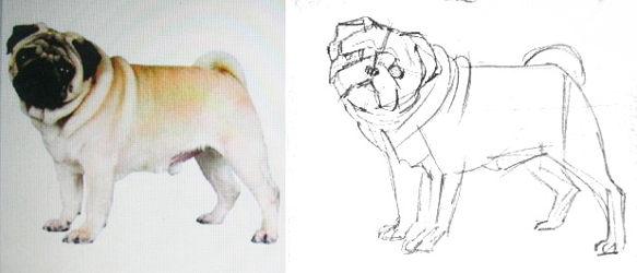 Эскиз мопса карандашом