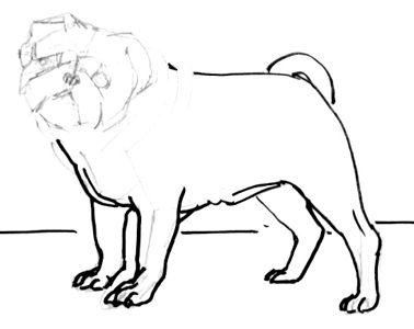 Рисуем ноги мопса