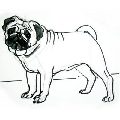 Как нарисовать мопса поэтапно