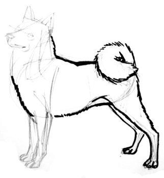 Нарисуем собаку лайку
