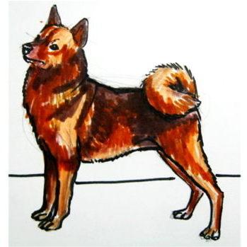 Как нарисовать собаку лайку