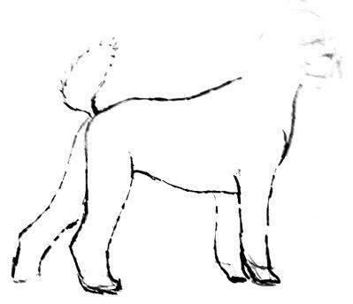 Урок рисования собаки пуделя