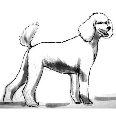 Рисунок -собака породы пудель