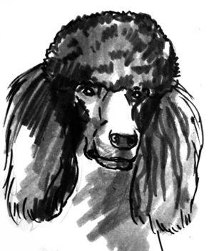 Рисунок -голова чёрного пуделя