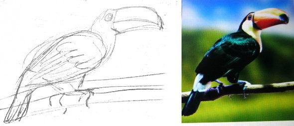 Как нарисовать птицу Тукана