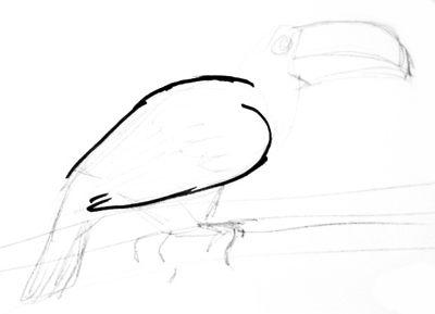 Рисуем птицу тукана