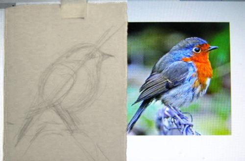 Как нарисовать малиновку-зарянку