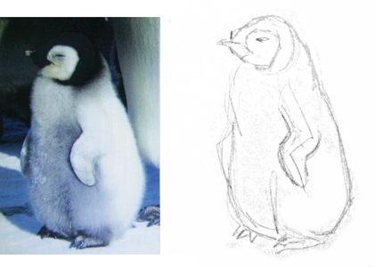 Как нарисовать пингвинёнка