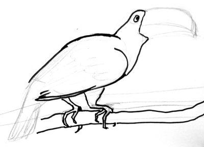 Поэтапный урок рисования Тукана