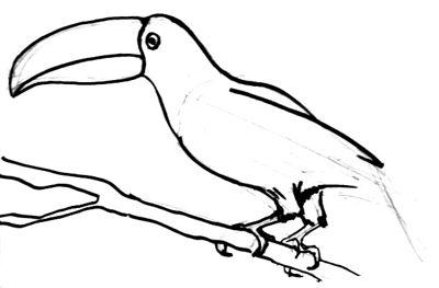 Урок поэтапного рисования Тукана