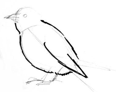Рисуем Зяблика