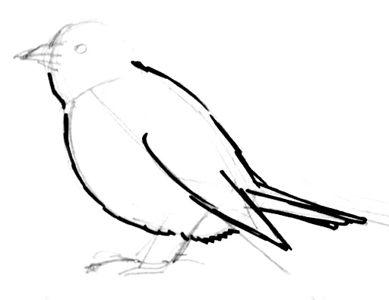 Рисуем Зяблика поэтапно