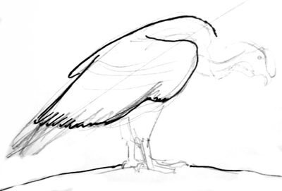 Рисуем кондора поэтапно