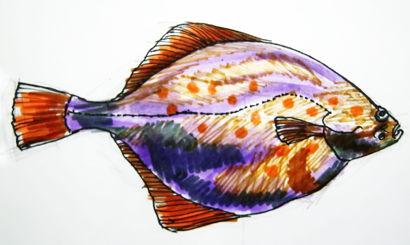 Камбала рисунок