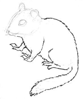 Урок поэтапного рисования бурундука