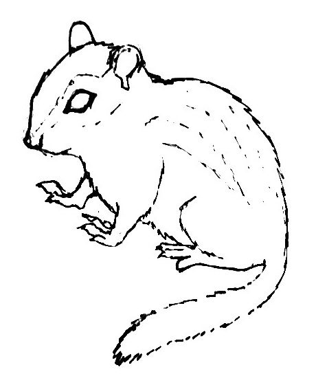 Раскраска -рисунок Бурундук