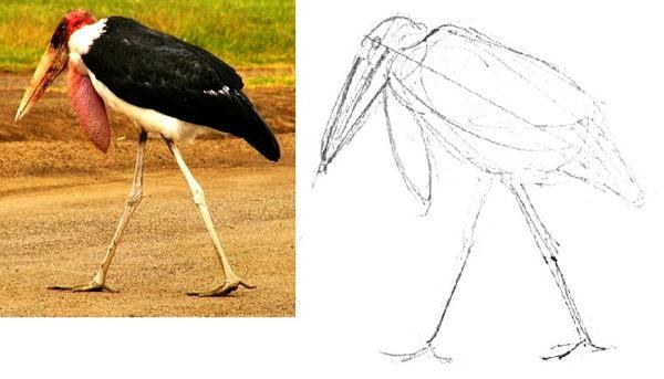 Как нарисовать аиста Марабу
