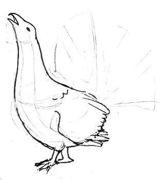 Нарисуем ноги и крылья глухаря
