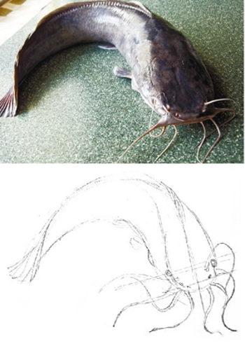Как нарисовать сома
