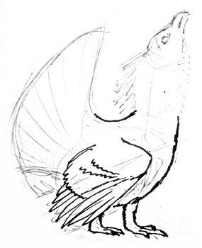 Рисуем лапы глухаря