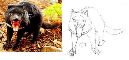 Как нарисовать тасманского дьявола