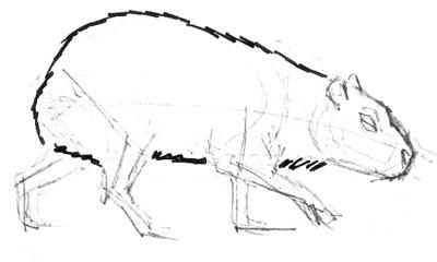 Рисуем капибару