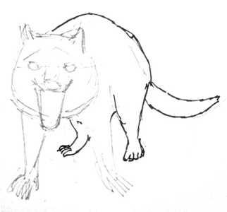 Урок поэтапного рисования тасманского дьявола