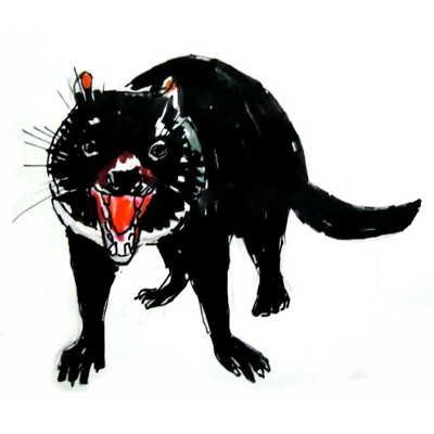 Как нарисовать тасманского дьявола  поэтапно