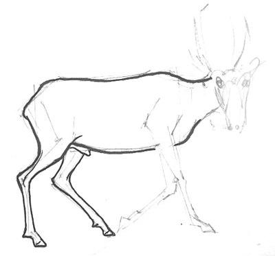 Урок рисования сайгака